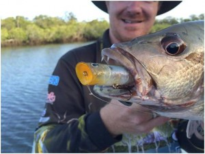 Mangrove Jack on Popper